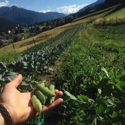 campo di verdure
